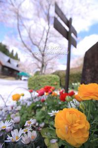花壇 - my FHOTO