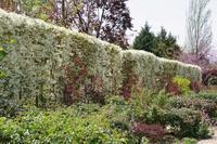 薔薇の開花を待つトレジャーガーデンに咲く花たち  Ⅱ - 季節の風を追いかけて