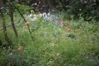 雑草の花畑 - 世話要らずの庭