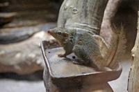 上野動物園:NEWフェイス登場&マイナーチェンジの小獣館(July 2018) - 続々・動物園ありマス。