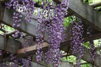 葛飾区小菅公園の花観る。 - 一場の写真 / 足立区リフォーム館・頑張る会社ブログ