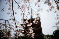 早春の京都2019(17) - Tullyz bis /R-D1ときどきM