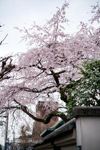 早春の京都2019(22) - Tullyz bis /R-D1ときどきM