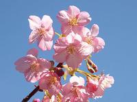 この春の花見桜の総集編1 - しらこばとWeblog