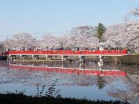 この春の花見桜の総集編3 - しらこばとWeblog