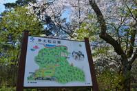今年も水芭蕉と桜が・・「浄土松公園」 - Nature World & Flyfishing