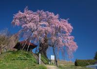上石の不動桜 - Patrappi annex