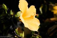 徳之島の花part2 - The blog of meraki
