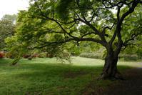 小石川植物園 - hoppy's