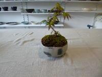 盆栽のその後と小皿の制作 - サンカクバシ 土と私の日記