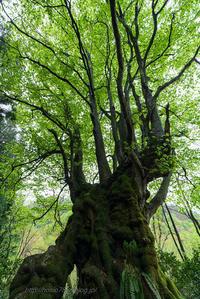 新緑と巨木 - デジタルで見ていた風景