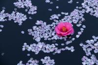 桜と椿 - In My Life