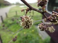 『フラワーパーク江南の花達~』 - 自然風の自然風だより
