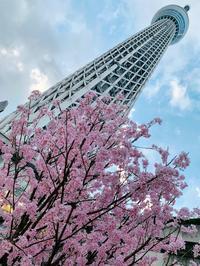 お花見の記録2019 - スクール809 熊本県荒尾市の個別指導の学習塾です