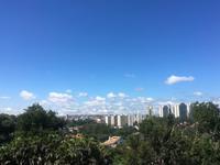 土曜日は忙しい。。。 - ハチドリのブラジル・サンパウロ(時々日本)日記