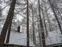 G.W.初日は雪・・これが本当に平成最後の雪リス! - 十勝・中札内村「森の中の日記」~café&宿カンタベリー~