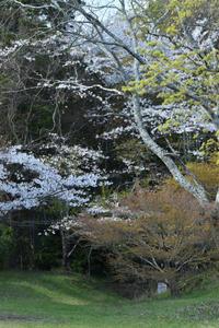 大和多武峰談山神社(やまととうのみねたんざんじんじゃ) - 高原に行きたい