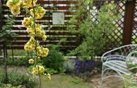 わくわく色々咲きだしてきた~♪ - miyorinの秘密のお庭
