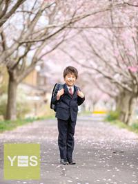 桜とぴかぴかランドセル - つくば市のフォトスタジオ*よしや写真館のBLOG*