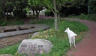 花びら - 小太郎の白っぽい世界