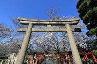 六孫王神社の桜 - ぴんぼけふぉとぶろぐ2