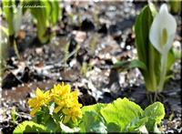 春の香り(滝野公園) - 北海道photo一撮り旅