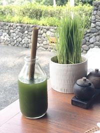 インドネシアの秘薬 JAMU(ジャムー) Drink - natural essence : EKO PROJECT