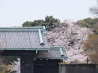 この春の花見桜の総集編2 - しらこばとWeblog