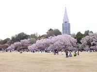 この春の花見桜の総集編4(おしまい) - しらこばとWeblog