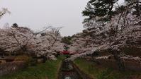 翠ヶ丘公園の桜比較2@福島県須賀川市 - 963-7837