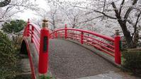 翠ヶ丘公園の桜比較3@福島県須賀川市 - 963-7837