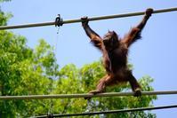 アピちゃんのスカイウォーク - 動物園に嵌り中