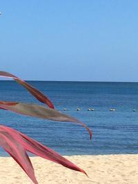 白い砂浜、青い空、青い海 - ダイアリー