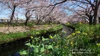 四月の道 - フォト エチュード  Photo-Etudes