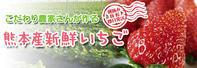 母の日ギフト2019至高の最旬フルーツをお届けしませんか?第2弾!:熊本産高級イチゴ『熊紅』 - FLCパートナーズストア