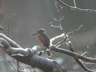 春にくる鳥さんたち。 - ヒロムシ君のお散歩日記