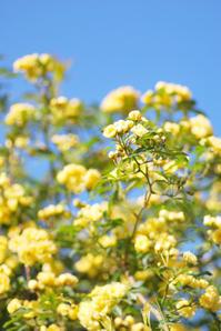 4/30光輝く気持ち高ぶる - 「あなたに似た花。」