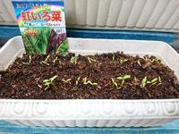 虹いろ菜の新芽 - NATURALLY