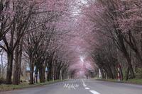 ネックレスロード - Aruku