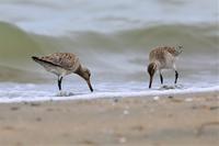 海にも春がpart2 - 綺麗な野鳥たち