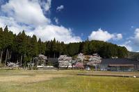桜巡り2019@京北東光寺 - デジタルな鍛冶屋の写真歩記