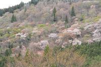 芽吹き始めた渓谷 - 虫籠物語