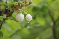 霜止んで苗いずる:4月23日〜29日 - 週刊「目指せ自然農で自給自足」