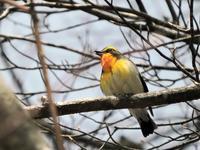 裏磐梯の人出 - 今日の鳥さん+α(初心者野鳥写真集)