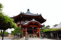 興福寺で藤を見た(2019/04/28) - ほんじつのおすすめ