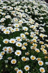 庭の花たち - 何となく晴!blog2