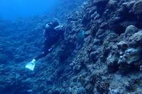 19.4.29お天気コロコロ - 沖縄本島 島んちゅガイドの『ダイビング日誌』