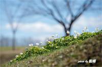 「足元の春」 - 藍の郷