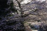 桜井市今井谷 - ぶらり記録 2:奈良・大阪・・・