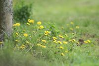 蓮華寺池公園の花 - 暮らしの中で